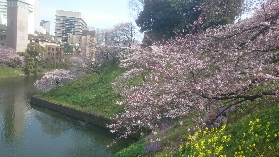 縁結びのご利益がある・・らしい。東京大神宮でお参り
